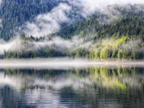 Khám phá những khu rừng đẹp nhất thế giới - Ảnh 2.