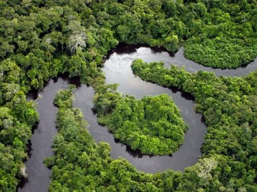 Khám phá những khu rừng đẹp nhất thế giới - Ảnh 3.