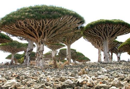 Khám phá những khu rừng đẹp nhất thế giới - Ảnh 4.