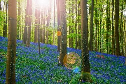 Khám phá những khu rừng đẹp nhất thế giới - Ảnh 5.