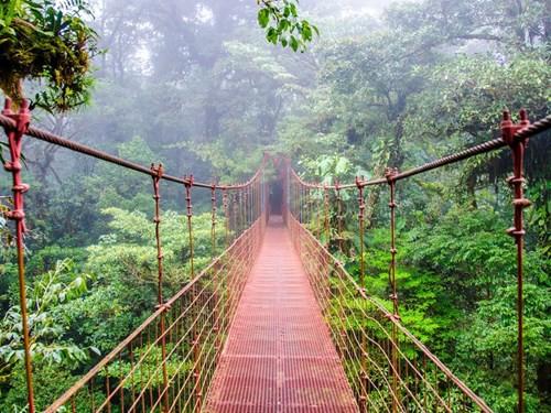 Khám phá những khu rừng đẹp nhất thế giới - Ảnh 6.