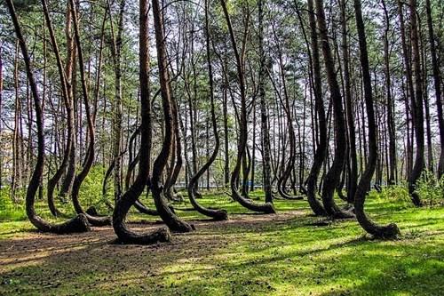 Khám phá những khu rừng đẹp nhất thế giới - Ảnh 7.