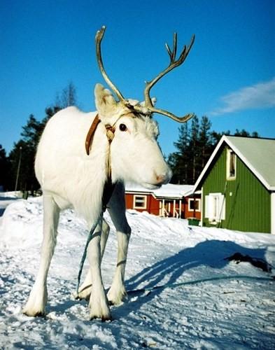 8 nơi đẹp quyến rũ nhất đất nước Thụy Điển - Ảnh 3.