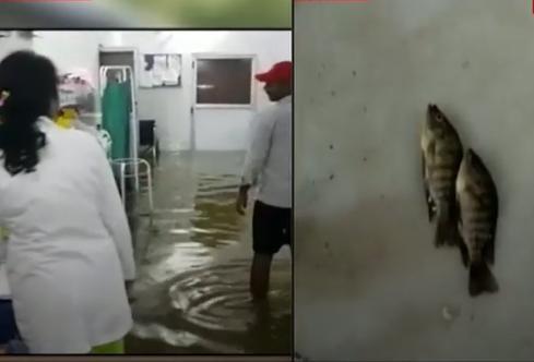 Ấn Độ: Mưa lớn gây ngập nặng, cá bơi vào bệnh viện - Ảnh 2.