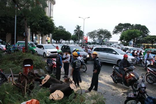 Gió quật ngã cây xanh ở Công trường Mê Linh, đè bị thương 2 người - Ảnh 5.
