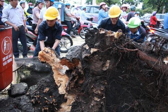 Gió quật ngã cây xanh ở Công trường Mê Linh, đè bị thương 2 người - Ảnh 4.
