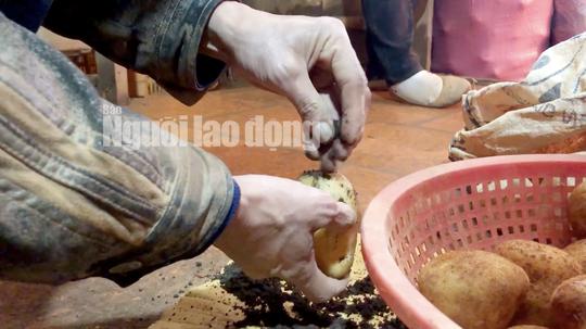 VIDEO điều tra: Đường đi nông sản Trung Quốc nhái Đà Lạt - Ảnh 6.