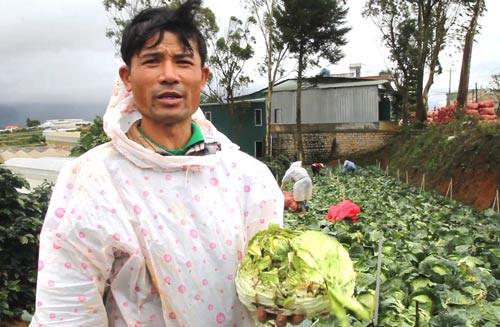 ĐIỀU TRA: Nông sản Trung Quốc nhái - nỗi đau của nông dân Đà Lạt - Ảnh 1.
