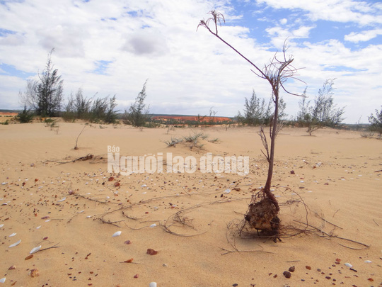 Flycam: Mỏ khai thác titan băm nát bãi biển Bình Thuận - Ảnh 11.