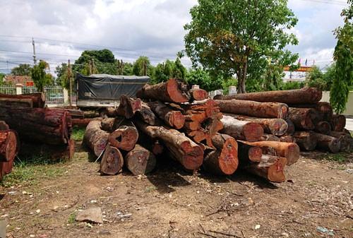 Vụ trùm gỗ lậu Phượng râu: Không kỷ luật lãnh đạo Bộ đội Biên phòng Đắk Lắk - Ảnh 1.