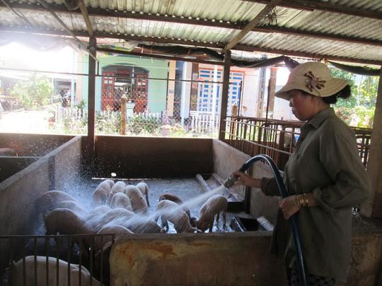 Giám sát chặt cửa khẩu, đường mòn để ngăn chặn dịch tả lợn Châu Phi - Ảnh 1.