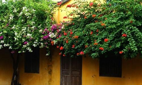 Ngắm nhà cổ Hội An đẹp lịm tim với giàn hoa giấy - Ảnh 7.