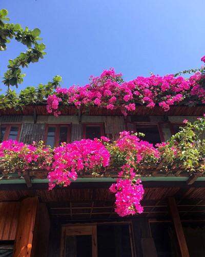 Ngắm nhà cổ Hội An đẹp lịm tim với giàn hoa giấy - Ảnh 9.