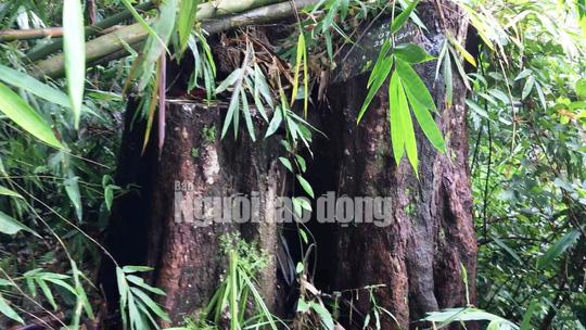 Phó Thủ tướng chỉ đạo điều tra làm rõ vụ phá rừng ở Lâm Đồng - Ảnh 6.