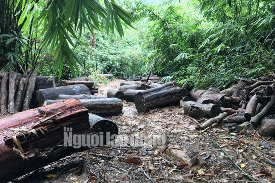 Phó Thủ tướng chỉ đạo điều tra làm rõ vụ phá rừng ở Lâm Đồng - Ảnh 2.