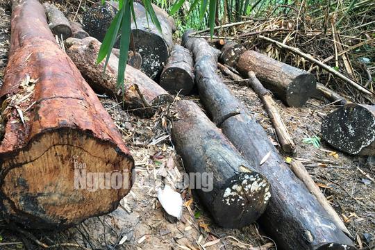 Phó Thủ tướng chỉ đạo điều tra làm rõ vụ phá rừng ở Lâm Đồng - Ảnh 3.