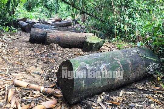 Phó Thủ tướng chỉ đạo điều tra làm rõ vụ phá rừng ở Lâm Đồng - Ảnh 4.