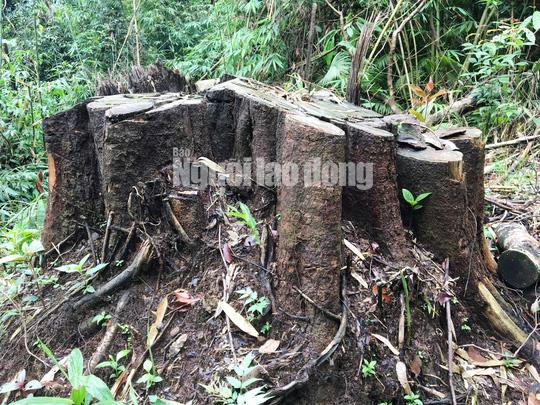 Phó Thủ tướng chỉ đạo điều tra làm rõ vụ phá rừng ở Lâm Đồng - Ảnh 5.