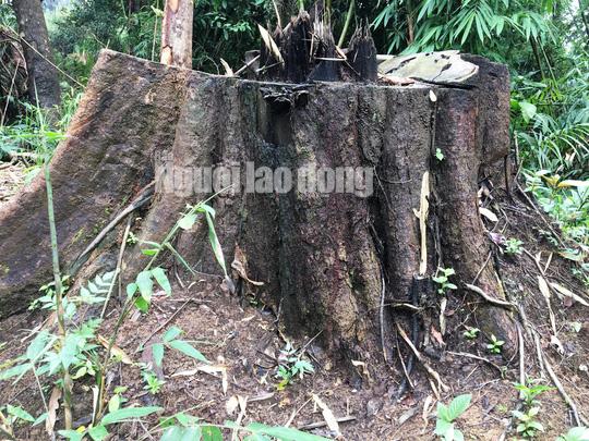 Phó Thủ tướng chỉ đạo điều tra làm rõ vụ phá rừng ở Lâm Đồng - Ảnh 7.