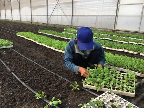 Gian nan tìm đất làm nông nghiệp
