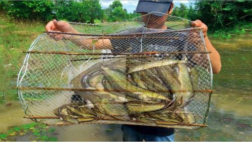 Mê mắt có một vài chiếc lọp đầy cá mùa nước nổi - Ảnh 3.