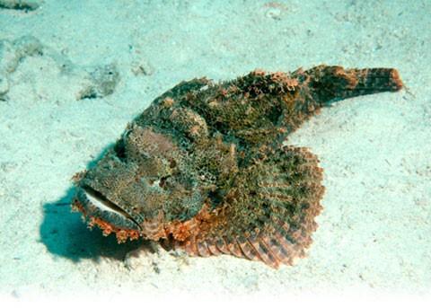 Điểm mặt những món hải sản có thể gây độc chết người - Ảnh 5.