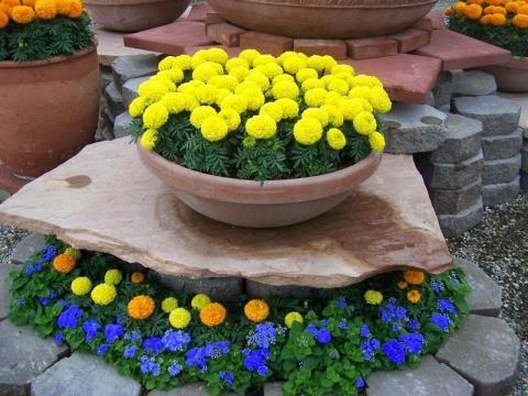 Chưng hoa gì vừa đẹp vừa tốt cho sức khỏe - Ảnh 1.