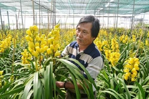 Mỏi mắt ngắm những vườn địa lan khủng nhất Việt Nam - Ảnh 11.