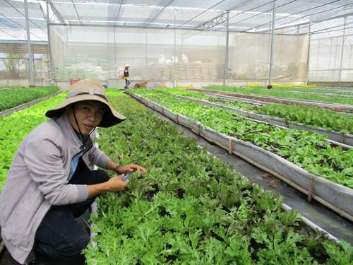 Học người Nhật làm nông nghiệp bền vững - Ảnh 1.