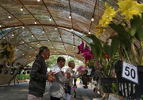 Hội chợ hoa Xuân Phú Mỹ Hưng 2019: Hội thi Hoa Cảnh: Sân chơi thú vị của nghệ nhân, nhà vườn - Ảnh 2.