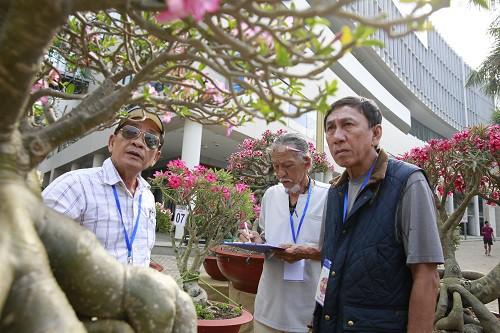 Cuộc thi Hoa Cảnh - Tôn vinh nét đẹp đặc sắc của các loài hoa kiểng Việt Nam - Ảnh 1.