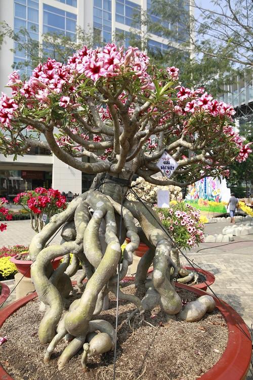 Cuộc thi Hoa Cảnh - Tôn vinh nét đẹp đặc sắc của các loài hoa kiểng Việt Nam - Ảnh 5.