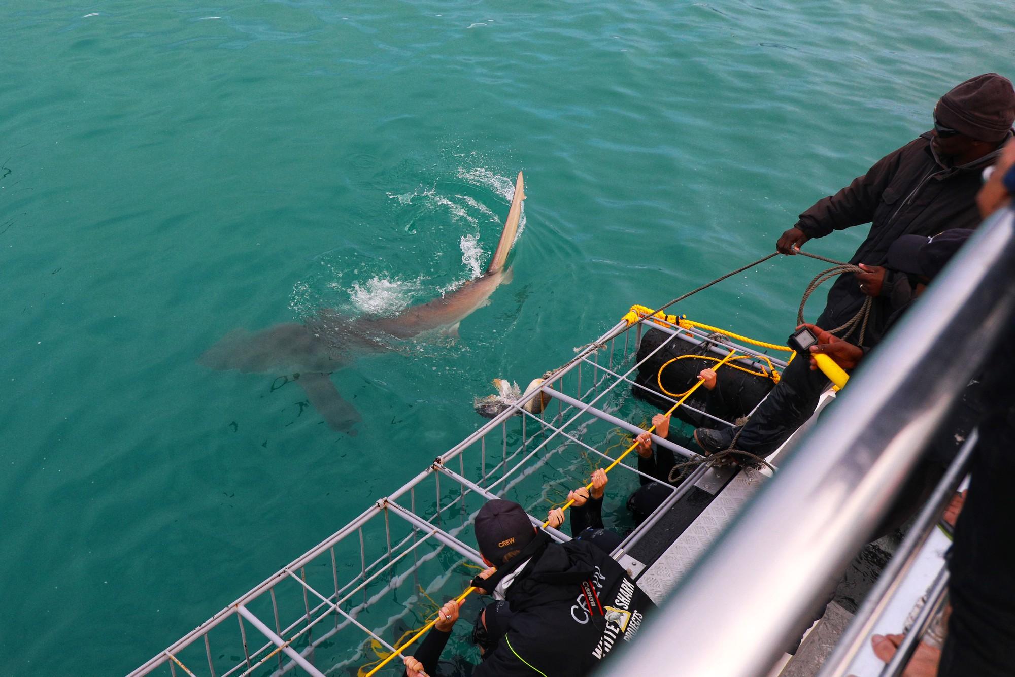 Chạm trán sát thủ đại dương tại Mũi Hảo Vọng - Ảnh 4.