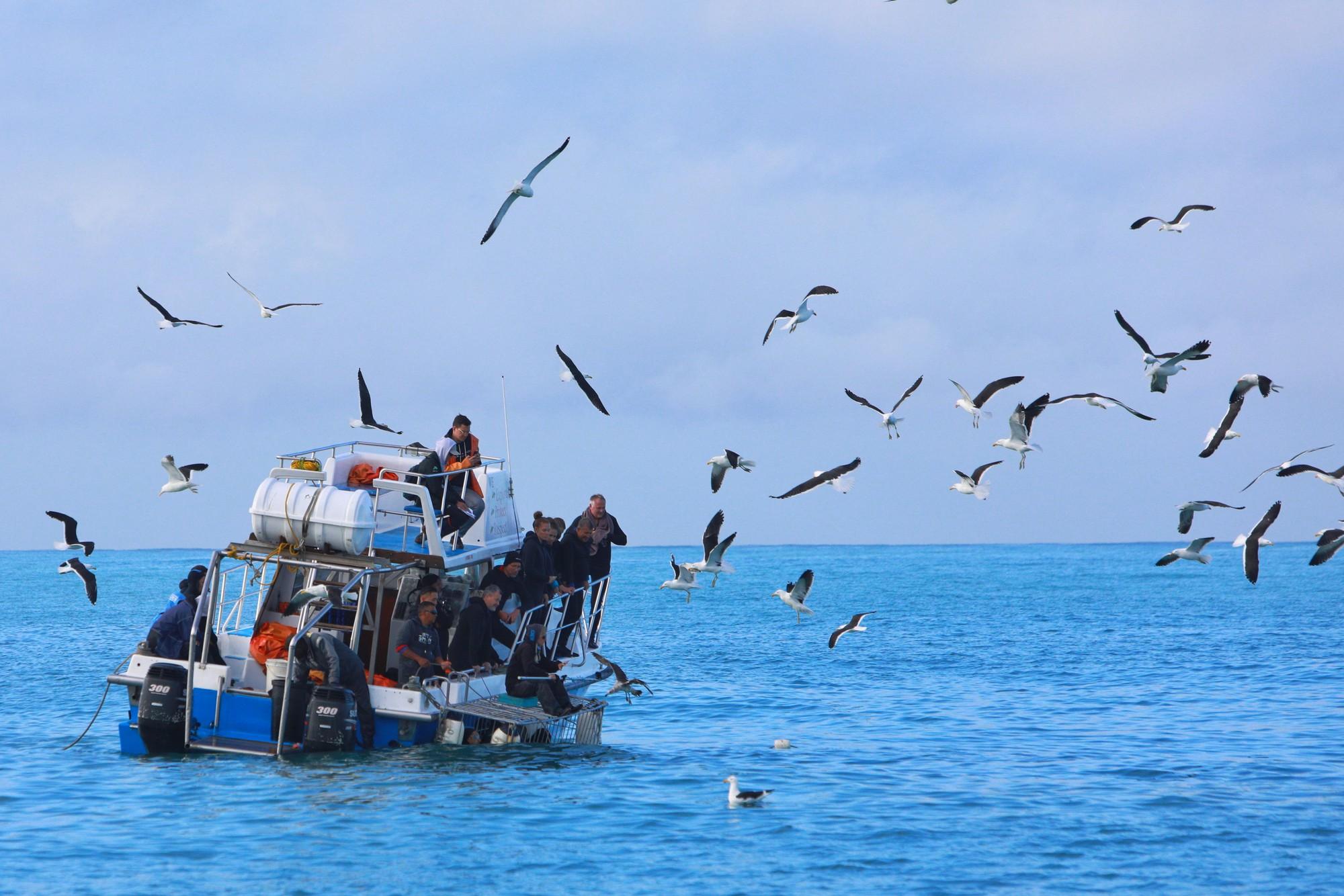 Chạm trán sát thủ đại dương tại Mũi Hảo Vọng - Ảnh 1.