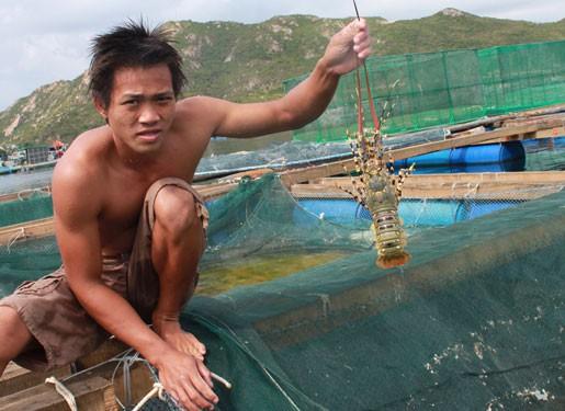 Lập chiến lược nuôi, trồng thủy sản - Ảnh 1.