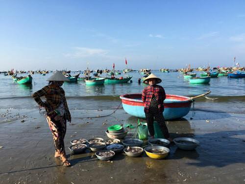 Chợ hải sản tính tiền theo thau ở Bình Thuận - Ảnh 2.