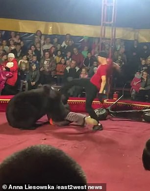 Gấu tấn công nghệ sĩ xiếc trên sân khấu không rào chắn - Ảnh 7.