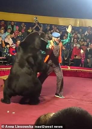 Gấu tấn công nghệ sĩ xiếc trên sân khấu không rào chắn - Ảnh 3.