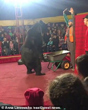 Gấu tấn công nghệ sĩ xiếc trên sân khấu không rào chắn - Ảnh 2.