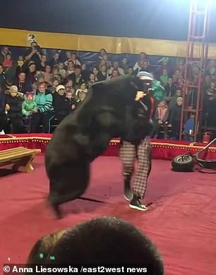 Gấu tấn công nghệ sĩ xiếc trên sân khấu không rào chắn - Ảnh 4.