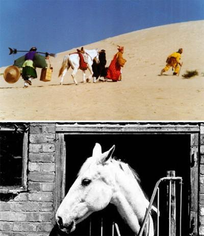 Đời phong ba của chú ngựa phim Tây du ký - Ảnh 4.