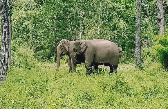 Đạp xe xuyên rừng Yok Đôn ngắm voi - Ảnh 1.