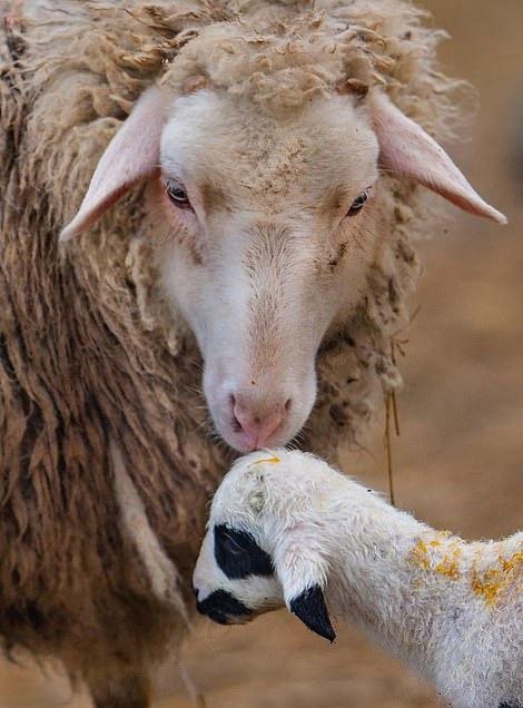 Khoảnh khắc dịu dàng hiếm có của động vật - Ảnh 6.