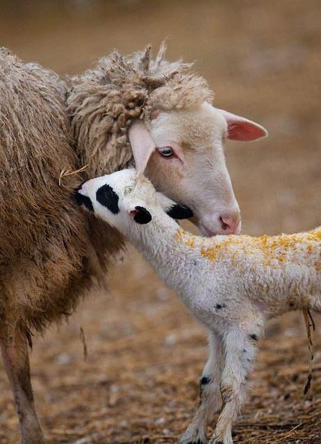 Khoảnh khắc dịu dàng hiếm có của động vật - Ảnh 7.