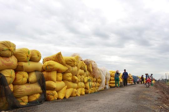 Khẩn trương bơm vốn cho doanh nghiệp cứu giá lúa, gạo - Ảnh 1.