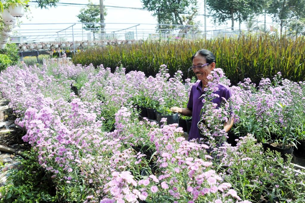 """[Emagazine] """"Phù thủy"""" của các loài hoa màu tím - Ảnh 2."""