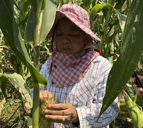 An ninh lương thực châu Á trước hiểm họa mới - Ảnh 1.