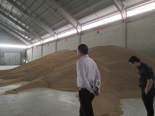 Kiến nghị không tái xuất lúa mì nhiễm cỏ kế đồng - Ảnh 1.