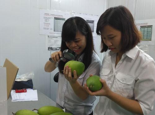 Trái cây Việt vào thị trường Mỹ