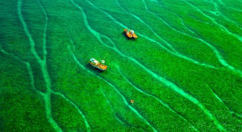 Bãi rêu cổ tích hút du khách khám phá trầm tích núi lửa Quảng Ngãi - Ảnh 12.